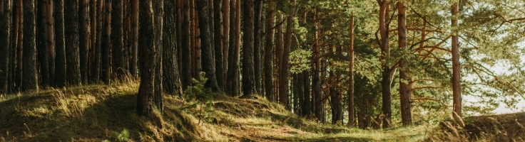 On 21 March The World Marks The International Day Of Forests Excalibur